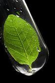 Leaf in test tube — Stock Photo