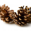Pine cones isolated on white — Stock Photo