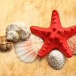 Seastar and seashells on stained paper — Stock Photo