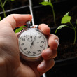 Green seedling and hand holding stopwatch — Stock Photo