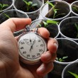 Green seedling and hand holding stopwatch — Stock Photo #31170839