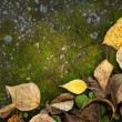 Autumn foliage and moss — Stock Photo