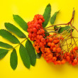 Stock Photo: Red ashberry