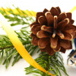 Twig of fir and cone — Stock Photo