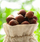 Fresh hazelnuts in sack — Foto Stock
