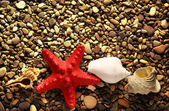 Seastar on pebbles — Stock Photo