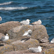 Seabirds. — Stock Photo