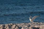Mewa na plaży. — Zdjęcie stockowe