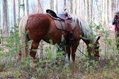 Brown horse grazing — Stock Photo
