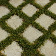 Stock Photo: Background. lawn around tiles