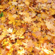 Yellow autumn leaves lying on the ground — Stock Photo