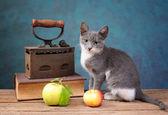 Cat posing next to an old irons — Stock Photo