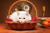White cat lying in a wicker basket — Stock Photo