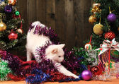 White cat playing with the Christmas — Stock Photo