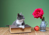 Cat playing with flower roses — Stok fotoğraf