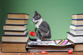 Cat posing with a book — Stockfoto