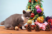 New Year's decoration and the cat — Stock Photo
