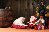 Vit katt leker med en jultomte — Stockfoto