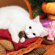 White cat plays with a mouse — Stock Photo