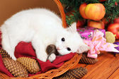White cat plays with a mouse — Stockfoto