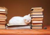 ぬいぐるみマウスを見て白猫 — ストック写真