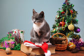 New Year's decoration and the cat — Foto de Stock