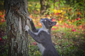 Cat climbs the apple tree — Stock Photo