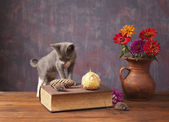 Cat posing next to flowers in a vase — Stock Photo