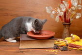Cat playing with a plush mouse on the table — Foto Stock