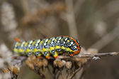 Caterpillar resting on dry branch — Photo