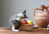 Gato jugando — Foto de Stock