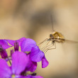 The insect collects pollen from flowers — Stock Photo #44883149