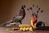 Stuffed pheasant and rooster looking at corn — Stock Photo