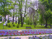 Park, flowers and trees — Stock Photo