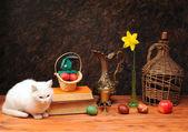 Chat blanc, posant à côté de livres et fleurs — Photo