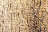 Excised acacia  and tree rings — Stock Photo