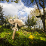 ������, ������: Mushroom of nickel from the grass in the garden