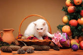 White cat playing with a plush mice — Stock Photo