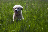 Cute dog in tall green grass — Stock Photo