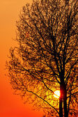 Red sunset over a tree — Stockfoto