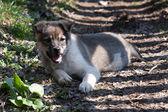 Ładny szczeniak — Zdjęcie stockowe