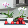 Orchids in kitchen — Stock Photo #13659354