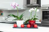 Orchideen in küche — Stockfoto