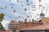 Bird flying over roofs — Stock Photo