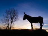 âne de silhouette — Photo