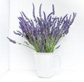 Lavender — Fotografia Stock
