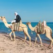 Bedouin on a camel — Stock Photo