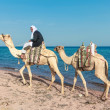 Stock Photo: Bedouin on a camel