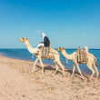 Camel driver — Stock Photo