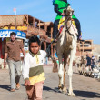 Boy leads a camel — Stock Photo